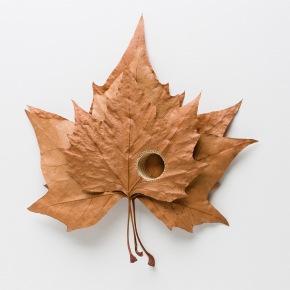wpid-leaf-1.jpg